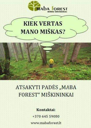Kiek vertas mano miškas