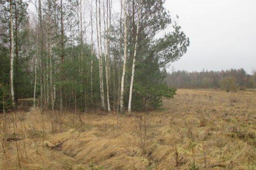 Kertame krūmus Perkame malkine mediena