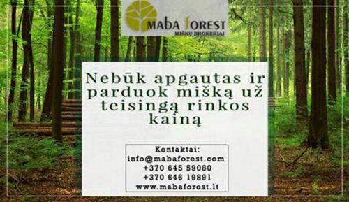 Nebūk apgautas ir parduok mišką už teisingą rinkos kainą