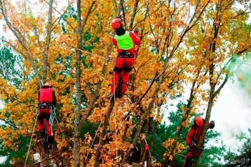 Medžių Pjovimas Visoje Lietuvoje 86 5555 800