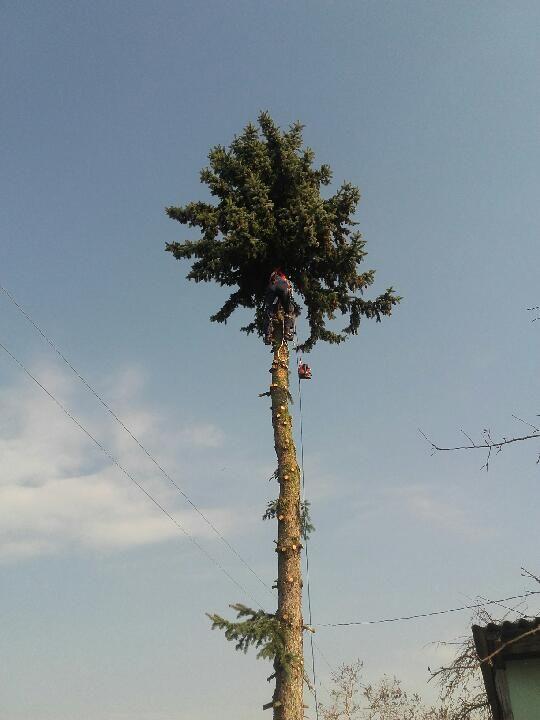 Avarinių medžių pjovimas-genėjimas.