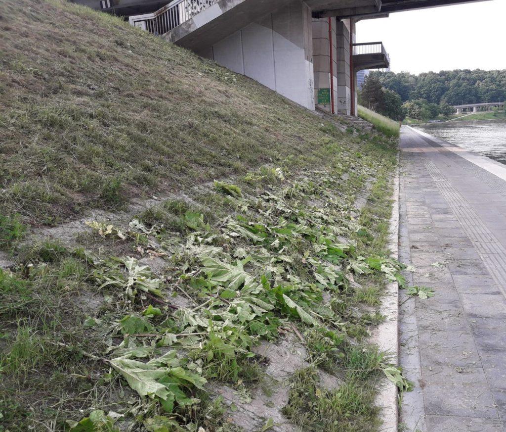 Aplinkos priežiūra