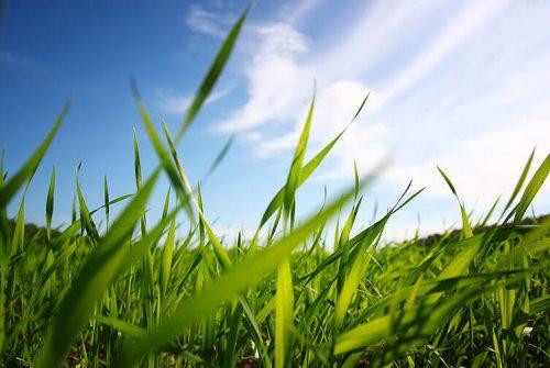 Vejos ir aukštos žolės pjovimas