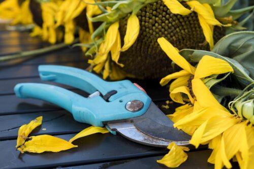 Įrankis.lt – sodo technikos nuoma